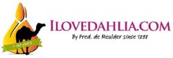 Ilovedahlia - dahlia - buy